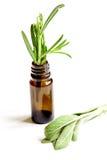 Φρέσκα θερινά χορτάρια - aromatherapy στο άσπρο υπόβαθρο Στοκ Φωτογραφίες