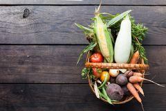 Φρέσκα θρεπτικά χορτοφάγα τρόφιμα, καλλιέργεια βιώσιμη r στοκ εικόνα