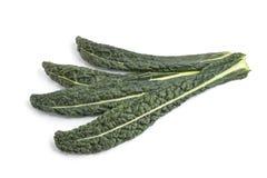 φρέσκα ιταλικά φύλλα λάχαν& Στοκ Εικόνες