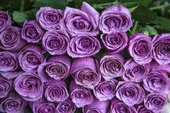 Φρέσκα ιώδη τριαντάφυλλα σε μια ανθοδέσμη με τις πτώσεις νερού στοκ φωτογραφία