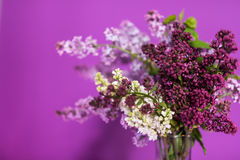 Φρέσκα ιώδη λουλούδια σε ένα απλό βάζο γυαλιού στοκ φωτογραφίες