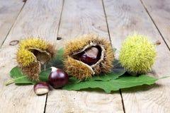 Φρέσκα κάστανα με τον ανοικτό φλοιό σε έναν παλαιό αγροτικό ξύλινο πίνακα με τα πράσινα φύλλα Στοκ εικόνες με δικαίωμα ελεύθερης χρήσης