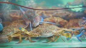 Φρέσκα καβούρια στη δεξαμενή ψαριών καθαρού νερού στην αγορά θαλασσινών απόθεμα βίντεο