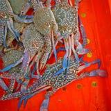 Φρέσκα καβούρια στον κάδο Στοκ Εικόνα