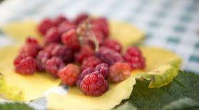 Φρέσκα και γλυκά σμέουρα στο κίτρινο φύλλο σταφυλιών το φθινόπωρο, τελευταία συγκομιδή πριν από το χειμώνα Στοκ Φωτογραφίες