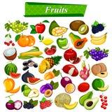 Φρέσκα και θρεπτικά φρούτα καθορισμένα συμπεριλαμβανομένου του μήλου, πορτοκάλι, σταφύλια, καρύδα, μούρο απεικόνιση αποθεμάτων