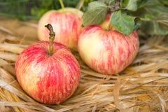 Φρέσκα και οργανικά μήλα Στοκ Εικόνες