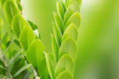 φρέσκα και πράσινα φύλλα σε μια πράσινη θαμπάδα υποβάθρου Στοκ Εικόνες