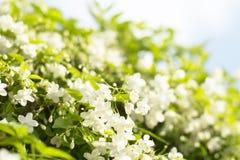 φρέσκα και όμορφα άγρια λουλούδια δαμάσκηνων νερού με Στοκ εικόνα με δικαίωμα ελεύθερης χρήσης