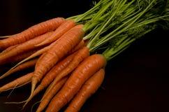 Φρέσκα καρότα κήπων Στοκ Φωτογραφία