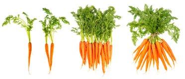 Φρέσκα καρότα με τα πράσινα φύλλα ακατέργαστο λαχανικό τρόφιμα υγιή στοκ φωτογραφίες