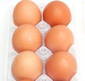 Φρέσκα καφετιά αυγά χωρών που συσκευάζονται Στοκ Εικόνα