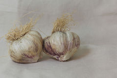 φρέσκα κεφάλια τρία σκόρδου βολβών Στοκ φωτογραφία με δικαίωμα ελεύθερης χρήσης