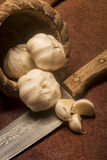 φρέσκα κεφάλια τρία σκόρδου βολβών Στοκ Εικόνα