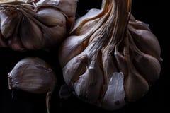 φρέσκα κεφάλια τρία σκόρδου βολβών Στοκ Φωτογραφία