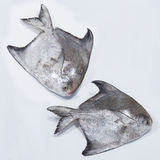 Φρέσκα κινεζικά Pomfret ψάρια Στοκ φωτογραφία με δικαίωμα ελεύθερης χρήσης