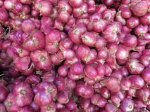 Φρέσκα κρεμμύδια Στοκ εικόνες με δικαίωμα ελεύθερης χρήσης