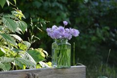 Φρέσκα κρεμμύδια ανθοδεσμών με τα πορφυρά λουλούδια στο σαφές γυαλί στο ξύλο Στοκ Φωτογραφία