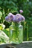 Φρέσκα κρεμμύδια με τα πορφυρά λουλούδια στο σαφές γυαλί Στοκ Φωτογραφίες