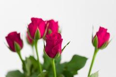 Φρέσκα κόκκινα τριαντάφυλλα ανθοδεσμών Στοκ Φωτογραφίες