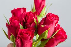 Φρέσκα κόκκινα τριαντάφυλλα ανθοδεσμών Στοκ εικόνα με δικαίωμα ελεύθερης χρήσης