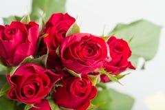 Φρέσκα κόκκινα τριαντάφυλλα ανθοδεσμών Στοκ Εικόνες
