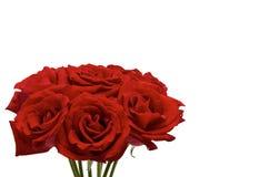 Φρέσκα κόκκινα τριαντάφυλλα που το ζεύγος επιθυμεί για να δώσει το ένα το άλλο για την ημέρα Valentine's στοκ φωτογραφία
