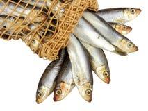 Φρέσκα κλυπέες και δίκτυο ψαριών Στοκ φωτογραφία με δικαίωμα ελεύθερης χρήσης