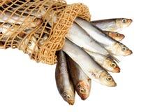 Φρέσκα κλυπέες και δίκτυο ψαριών Στοκ εικόνα με δικαίωμα ελεύθερης χρήσης