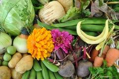 Φρέσκα λαχανικά Στοκ Φωτογραφίες