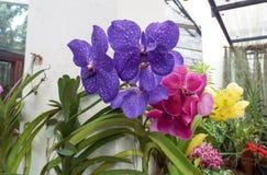 Φρέσκα λουλούδια κήπων από τον κήπο Στοκ Εικόνες