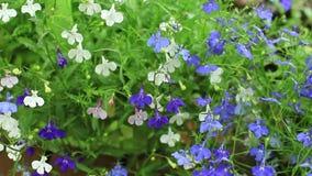 Φρέσκα λουλούδια πρωινού φιλμ μικρού μήκους