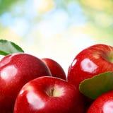 Φρέσκα μήλα Στοκ Εικόνα