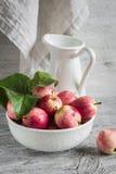 Φρέσκα μήλα κήπων σε ένα άσπρο κύπελλο, σμαλτωμένη τρύγος στάμνα Στοκ εικόνες με δικαίωμα ελεύθερης χρήσης