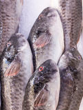 Φρέσκα μεσογειακά ψάρια στην αγορά στον πάγο 2 στοκ φωτογραφίες