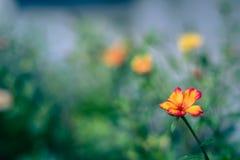 Φρέσκα μουτζουρωμένα λουλούδια υποβάθρου υποβάθρου άνοιξη Στοκ Εικόνα