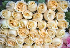 Φρέσκα μπεζ τριαντάφυλλα σε μια ανθοδέσμη με τις πτώσεις νερού στοκ εικόνες