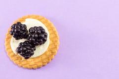 Φρέσκα μπισκότα βατόμουρων Στοκ Εικόνες