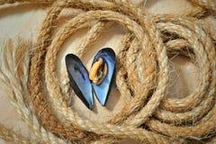 Φρέσκα μύδια θάλασσας Στοκ εικόνες με δικαίωμα ελεύθερης χρήσης