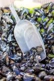 Φρέσκα μύδια στην αγορά αγροτών ψαριών στην Προβηγκία Στοκ εικόνα με δικαίωμα ελεύθερης χρήσης