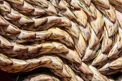 Φρέσκα μύδια Στοκ εικόνα με δικαίωμα ελεύθερης χρήσης