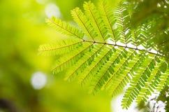 Φρέσκα νέα πράσινα φύλλα που καίγονται στον ήλιο & πράσινα φύλλα Στοκ εικόνα με δικαίωμα ελεύθερης χρήσης
