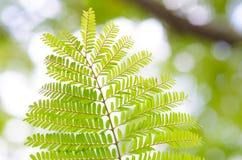Φρέσκα νέα πράσινα φύλλα που καίγονται στον ήλιο & πράσινα φύλλα Στοκ Φωτογραφίες