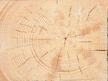 Φρέσκα ξύλινα στηρίγματα Στοκ Εικόνες