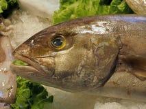 Φρέσκα ολόκληρα ψάρια σε μια αγορά τροφίμων στοκ εικόνα