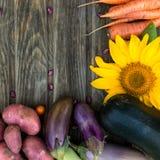 Φρέσκα οργανικά λαχανικά Έννοια συγκομιδών φθινοπώρου Πατάτες, toma στοκ φωτογραφία με δικαίωμα ελεύθερης χρήσης
