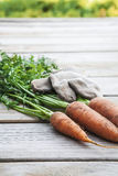 Φρέσκα οργανικά καρότα στον ξύλινο πίνακα Στοκ Εικόνες