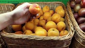 Φρέσκα οργανικά φρούτα στην αγορά των τοπικών αγροτών Κλείστε επάνω ενός ατόμου που επιλέγει τα ώριμα πορτοκαλιά βερίκοκα της Far απόθεμα βίντεο