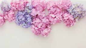Φρέσκα λουλούδια hydrangea Στοκ φωτογραφίες με δικαίωμα ελεύθερης χρήσης