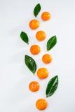 Φρέσκα ολόκληρα tangerines και φύλλα στο λευκό Στοκ φωτογραφία με δικαίωμα ελεύθερης χρήσης